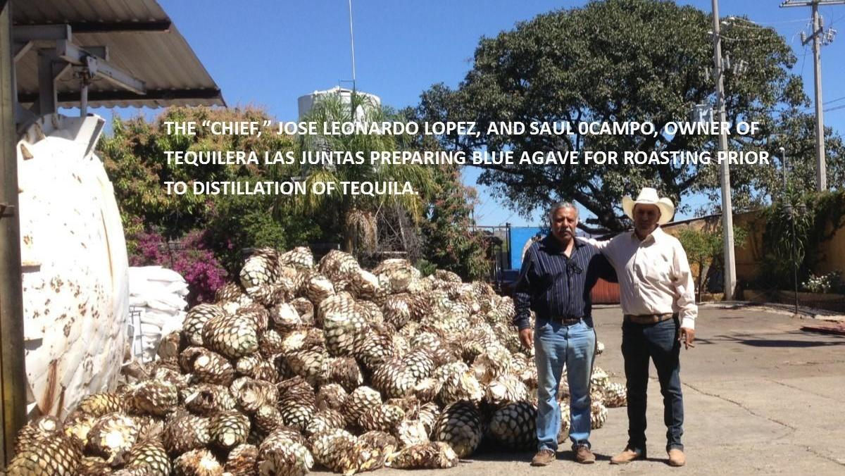 Xl_cropped_agave.pic.chief.saul
